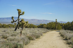 Arthur B Ripley Desert Woodland State Park Stock Foto