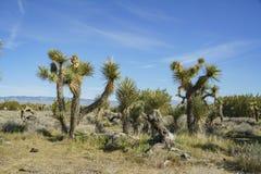 Arthur B Ripley Desert Woodland State Park Immagini Stock Libere da Diritti