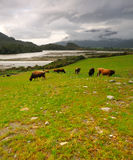 Arthur's Pass after the storm. Grazing lands after the storm, Arthur's Pass National Park, New Zealand royalty free stock photo