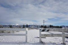 Arthurspas in sneeuw Royalty-vrije Stock Afbeeldingen