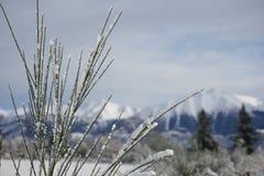 Arthurspas in sneeuw Royalty-vrije Stock Afbeelding