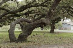 Arti di diffusione dei it's dell'albero in molte direzioni Immagini Stock