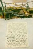 Arti grafiche di bei carte di calligrafia di nozze e cipolla del narciso e muschio Immagini Stock