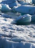Artic Tern - Jokulsarlon lake, Iceland Stock Image