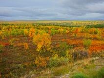 Artic tundra. Autumn colors (ruska), finnish lapland Stock Images