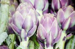 Artichauts organiques violets Images libres de droits
