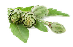 Artichoke. Fresh with a stalk and leaves Stock Photography