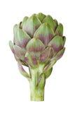 Artichoke. Ripe green artichoke isolated on white background Stock Images