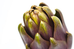 Artichoke Royalty Free Stock Images