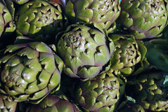 Artichoke buds Stock Images