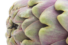 Artichoke close-up Royalty Free Stock Image