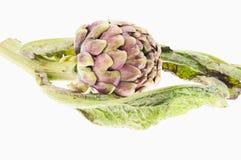 Artichoke. Closeup of a fresh artichoke on white background stock photography