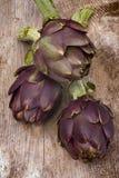 Artichoke (Cynara cardunculus) Royalty Free Stock Photos