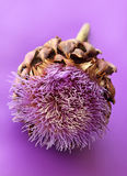 Artichoke flower Stock Images