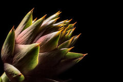 Artichoke with thorns. Artichoke flower with thorns on black background stock images