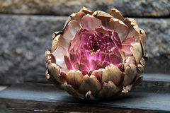 Artichoke flower Stock Photos