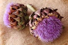 Artichoke flowers Stock Image