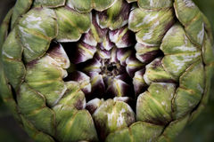 Artichoke fractal Royalty Free Stock Photos