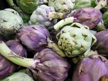 Artichoke fresh from the Garden Royalty Free Stock Image