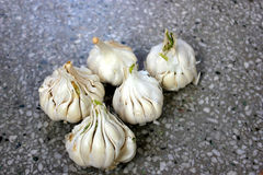 Artichoke garlic. Allium sativum, Alliaceae, Bulbous plant with bulb having several small cloves, used as spice and garnishing, sauces, pastes stock photos