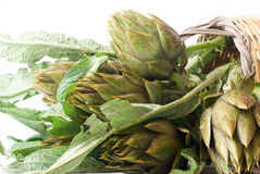 Artichoke (horizontal) Stock Photo