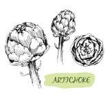 Artichoke Stock Images