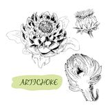 Artichoke Stock Image
