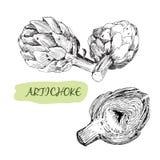 Artichoke Royalty Free Stock Image