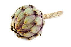 Artichoke lying Stock Image