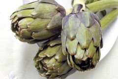 Artichoke plants in natural light Royalty Free Stock Photos