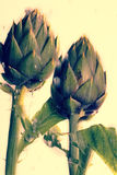 Artichoke in the rain Royalty Free Stock Image