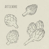 Artichoke set hand drawn botanical isolated and cutaway plant. Sketch vector illustration Royalty Free Stock Photography