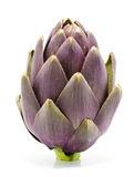 Artichoke Stand Up royalty free stock photo