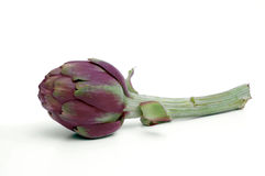 Artichoke teorema. Green artichoke over white background Royalty Free Stock Images