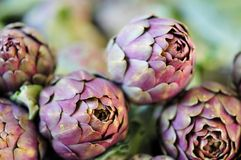 Artichoke, unblown flower Stock Images