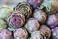 Artichoke, unblown flower Stock Photos