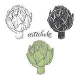 Artichoke. Vector illustration, sketch on a white background.   hand-drawn elements for your design. Stock Images