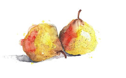 Pears yellow fruits watercolor painting illustration isolated on white background Royalty Free Stock Images