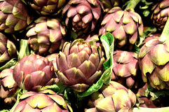 Artichoke, biological,vegetables, food, ingredient,organic. Group of artichoke with pointed leaves Stock Images