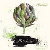 Artichoke in watercolor technique Royalty Free Stock Photos