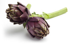 Artichokes. Close up of artichokes isolated on white background Royalty Free Stock Images