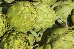 Artichokes close-up sunny view. Fresh artichokes close-up in a sunny day Royalty Free Stock Images