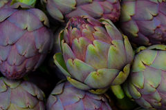 Artichokes. Fresh from the farm in purple and green hues Stock Photos