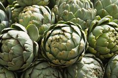 Artichokes in the sunshine Royalty Free Stock Photography