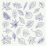 Articles de feuilles d'automne de dessin de dessin à main levée sur une feuille de livre d'exercice Photo stock