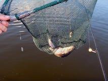 Articles de pêche pour les cannes à pêche, flotteurs Photographie stock libre de droits