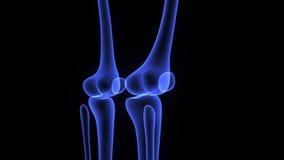 Articulação do joelho ilustração royalty free