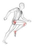 Articulation du genou accentuée illustration de vecteur