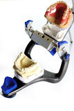 Articulator. With set of teeth royalty free stock photos