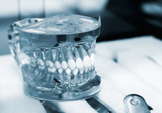 Articulator with dentures Stock Photos